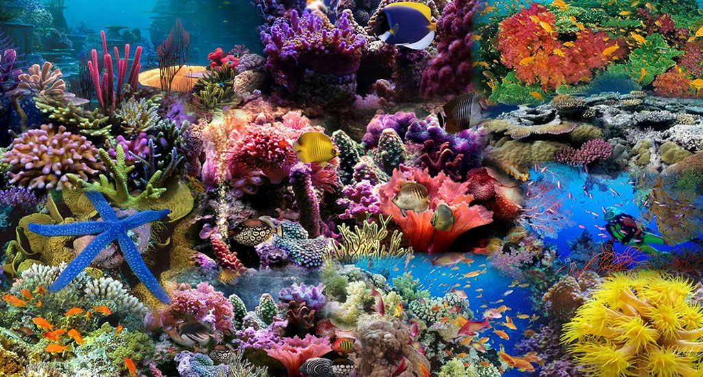 Tour BIỂN ĐẢO Quy Nhơn: Hòn Khô – Kỳ Co – Eo Gió – Lặn ngắm san hô